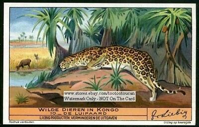 African Leopard Luipaard Stalking Prey 1930s Trade Ad Card