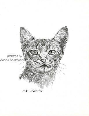 #361 ABYSINIAN front  view *  cat art print  *  pen & ink drawing by Jan Jellins