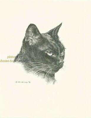 #118 BIRMESE CAT  * cat art print * pen & ink drawing by Jan Jellins
