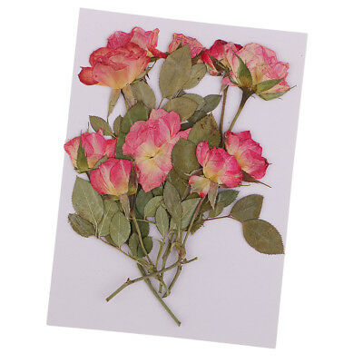 10x Pressed Dried Rose Flowers DIY Phone Case, Bookmark, Resin Jewelry Craft