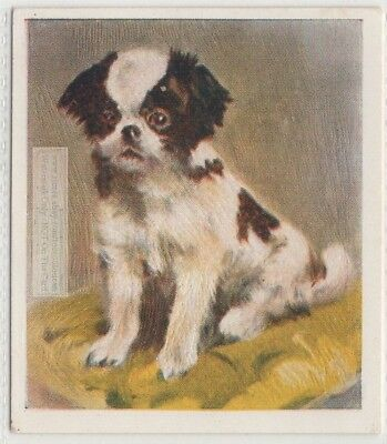Japanese Chin Puppy Dog Pet Animal Canine 80+ Y/O Trade Ad Card