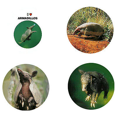 Armadillo Magnets : 4 Cool Armadillos for your Fridge or Collection-A Great Gift