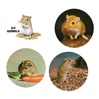 Gerbil Magnets:4 Cool Gerbils for your Fridge or Collection-A Great Gift