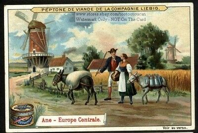 Burro Ass Mule In Central Europe NICE1899 Trade Ad Card