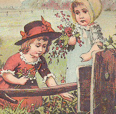 Dr Kilmers U & O Meadow Plant Anointment Trade Card, Cure All, Girls + Cows  K30