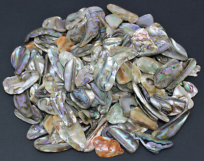 1/4 lb (4 oz) Lot Abalone Shell Polished Pieces (Healing Jewelry Protection)