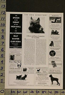 1932  Dog Canine Cairn Terrier Toy Puppy Breeder Photo Ad Ru26