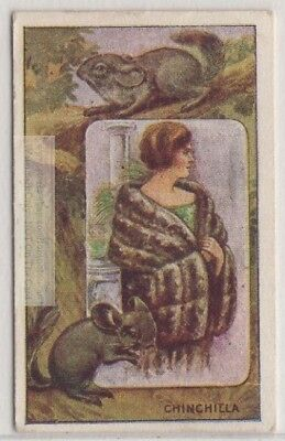 Chinchilla And Its Fur Pelt Trapping Hunting South America 1920s Trade  Ad Card