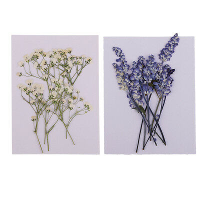 20x Pressed Dried Flowers Real Babysbreath Sage DIY Scrapbooking Arts Crafts