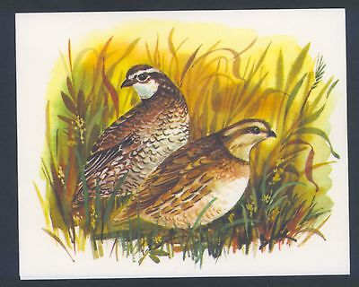 "Mint.! ""quail"" Game Birds In Wild,nutmeg Papers,blank,vintage Greeting,note Card"