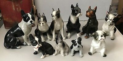 Collection of 10 different SITTING Boston Terrier Dogs