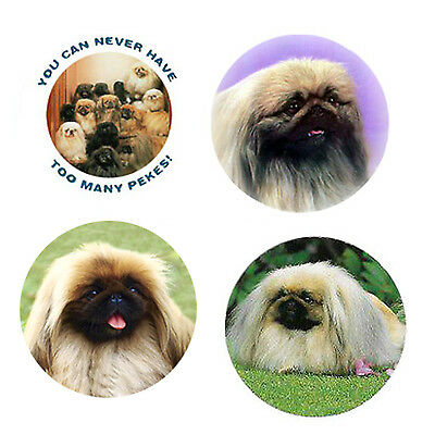 Pekingese Magnets 4 Cool Pekingese for your Fridge or Collection-A Great Gift