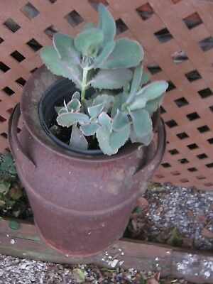 Vintage Rustic Rusty Primitive Small Milk Can good for flower pot / good decor