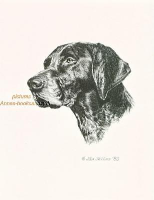#244 GERMAN SHORTHAIRED POINTER dog art print * Pen & ink drawing by Jan Jellins