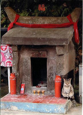 Alte Postkarte - Cat Stories in Taiwan