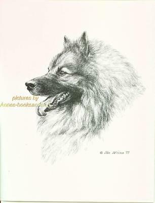 #171 KEESHOND portrait dog art print * Pen and ink drawing by Jan Jellins