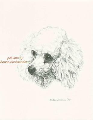 #251 WHITE POODLE portrait dog art print * Pen and ink drawing by Jan Jellins
