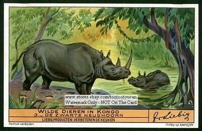African Rhinoceros 1930s Trade Ad Card