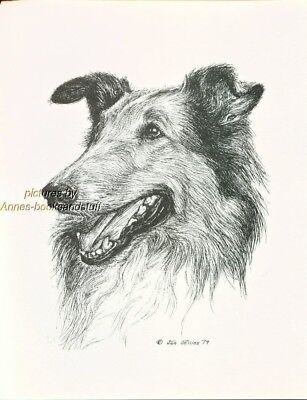 #24 SABLE COLLIE portrait *  dog art print * Pen and ink drawing * Jan Jellins