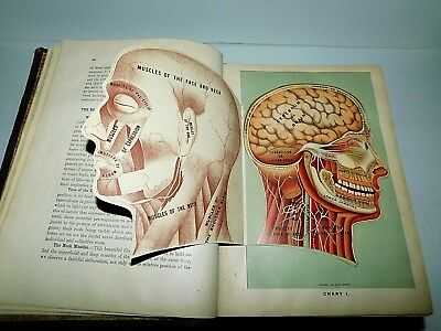 Fabulous Antique 1905 Medicology Book 10 Books In 1 Volume By Joseph Richardson