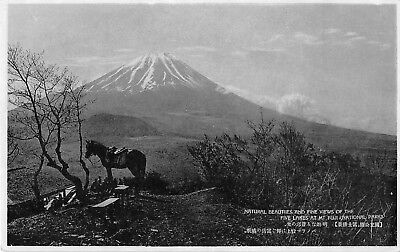 Japan View Five Lakes Mt Fuji National Park Volcano Mountain Horse Tree Postcard
