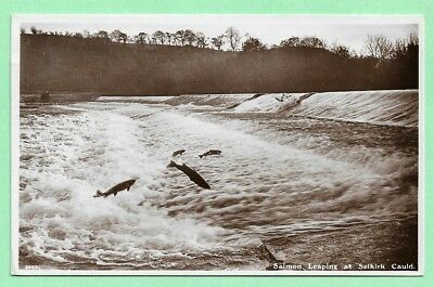 [12878] Selkirkshire R/P Postcard Salmon Leaping At Selkirk Cauld
