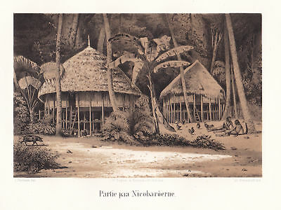 1851 Nikobaren Nicobar Islands India Ansicht Lithographie Litho Thornam