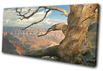 Grand Canyon Tree  Landscapes SINGLE CANVAS WALL ART Picture Print