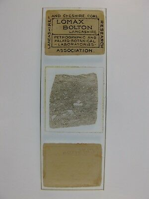 Antique Microscope Slide by James Lomax. Carboniferous Limestone from Clitheroe.