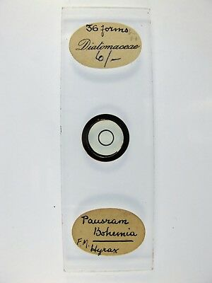 Antique Microscope Slide. Diatoms from Pausram, Bohemia. 36 forms.