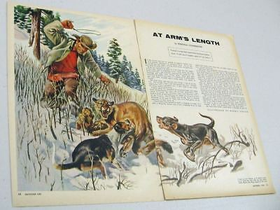 1955 Magazine Picture Hunter,Mountain Lion,Dogs Illustrated by Morris Gollub