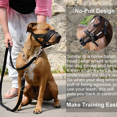 Dog Muzzle Head Collar With Loop Lead Control Fully Padded Adjustable Black
