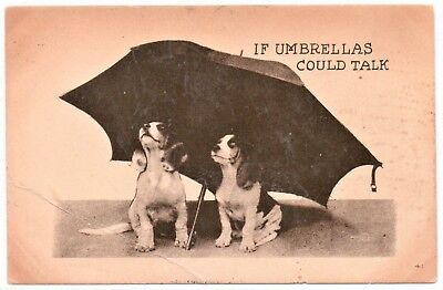 """Two Dogs under an Umbrella; """"if Umbrellas could talk"""", Vintage Postcard"""