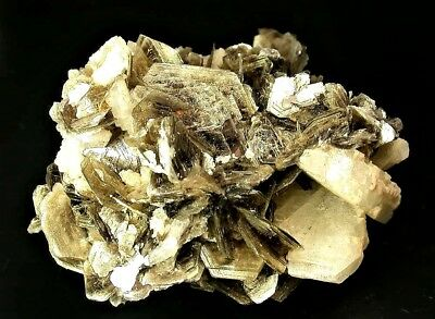 Minerals : Muscovite Crystals With Platy White Cleavelandite Crystals, Brazil