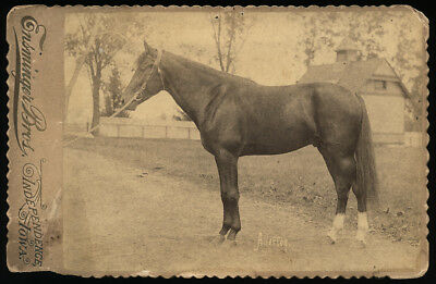 Rare Antique Photo Famed Trotting Horse ALLERTON Racehorse ~130 Yrs Old c1890