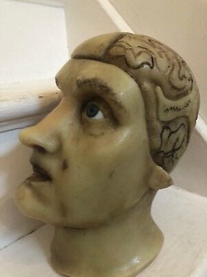 Vintage Wax Moulage Anatomical Face Oddity Death Mask Mannequin Head