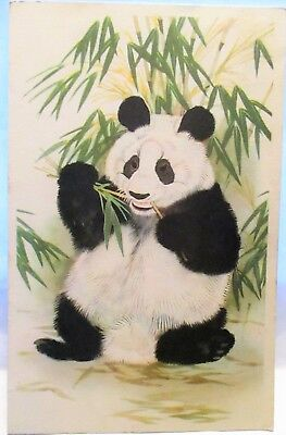 1949 Postcard Giant Panda Chewing On Bamboo, By Maurice Wilson