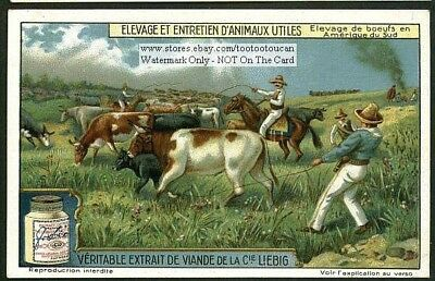 South American Cattle Ranch Gaucho 1915 Trade Ad Card