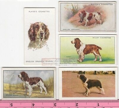 English Springer Spaniel Dog  5 Different Vintage Ad Trade Cards #3 Canine Pet