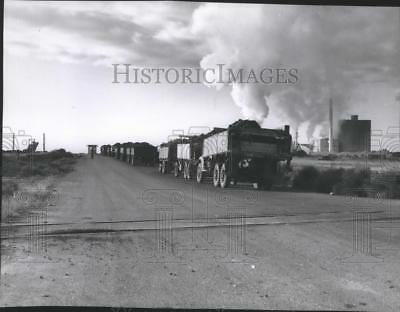 1955 Press Photo Trucks loaded with Sugar Beets harvest from Moses Lake