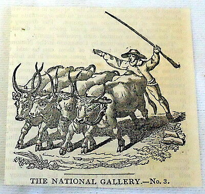 1832 small magazine engraving ~ DRIVING FOUR OXEN