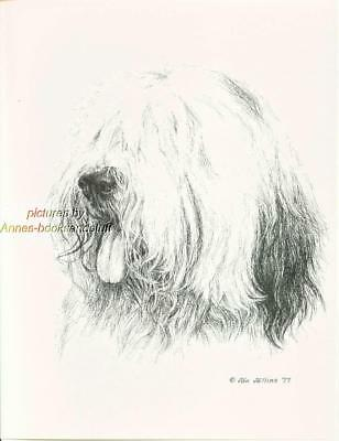#172 OLD ENGLISH SHEEPDOG *  dog art print Pen & ink drawing by Jan Jellins