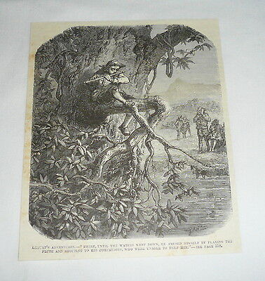 1877 magazine engraving ~ MAN PLAYING THE FLUTE WHILE SITTING IN A TREE