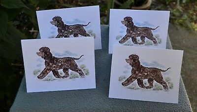Irish Water Spaniel .Post cards made from my original watercolor.Set of 4 .!