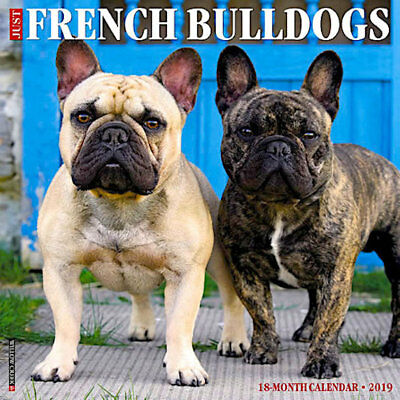 2019 Darling Frenchies French Bulldog Frenchie Dog  Wall Calendar 18 Month New
