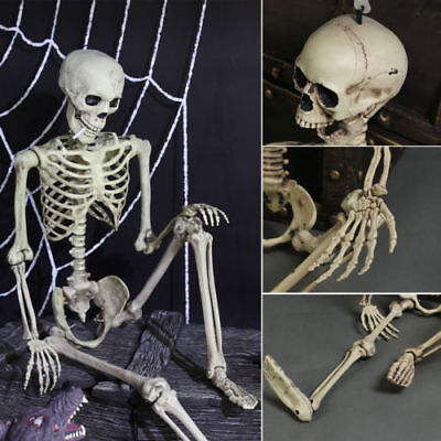 Halloween Poseable Full Life Size Human Animals Skeleton Party Prop Decoration