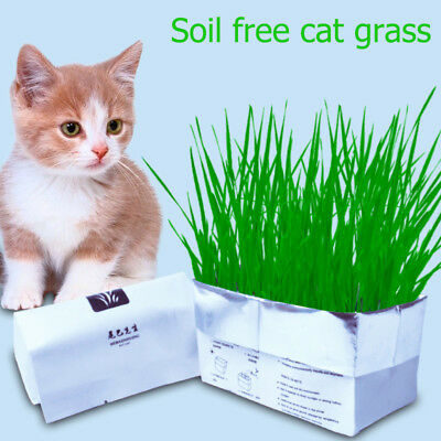 Harvested Planting Soil Free Cat Grass Pulp soil Organic Cat Catnip wheat seed