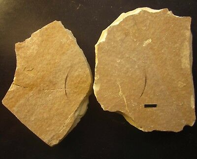 Feather Fossil,Beipiao, Liaoxi, China-70212