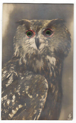 Unusual Novelty Postcard of Owl with Glass/Bead Eyes, Old Postcard Unused