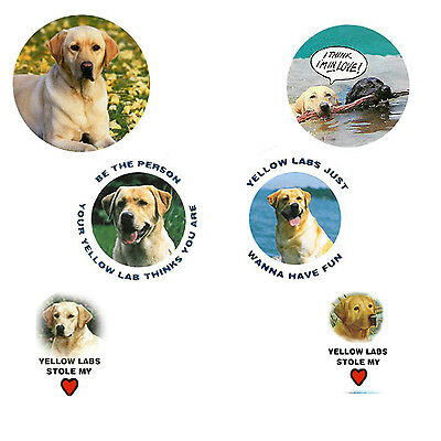 Lab Retriever Magnets-Yellow:   6 Yellow Labs for your Collection-A Great Gift